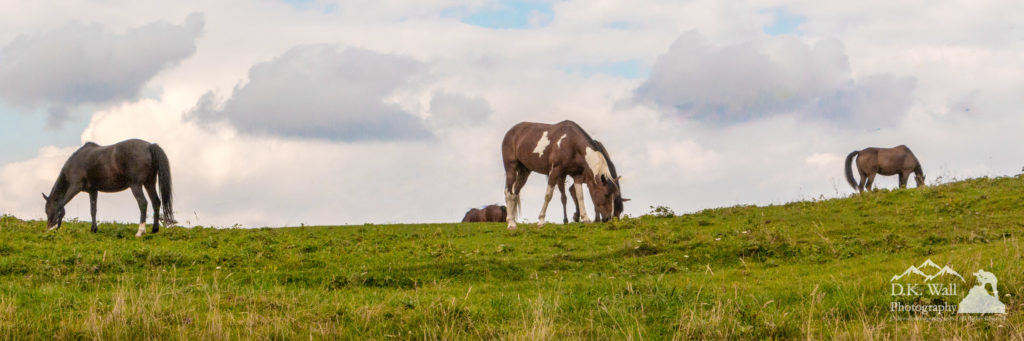 A relaxing, warm summer day and a pasture of green grass - a perfect horse day.