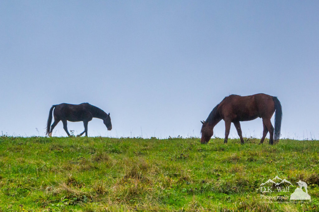 Horses grazing against a blue sky after the fog lifted.