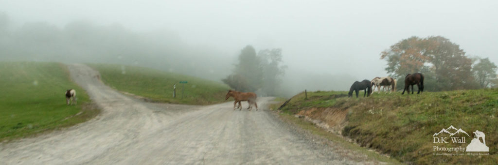 The horses crossing the ranch road in front of us.