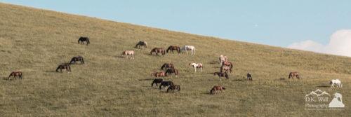 Horses on the Hill at Cataloochee Ranch
