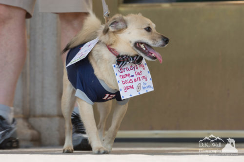 Sarge's Downtown Dog Walk 2016