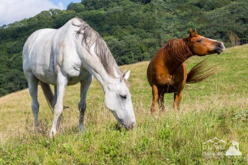 Summer Evening For Horses