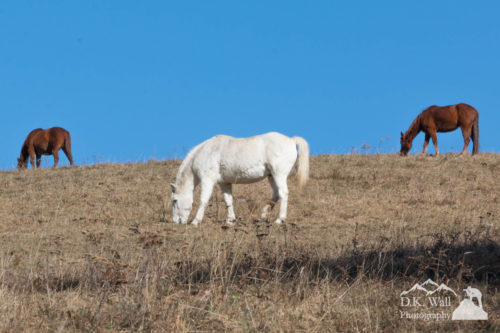 Horses Preparing For Winter - November 21 2016