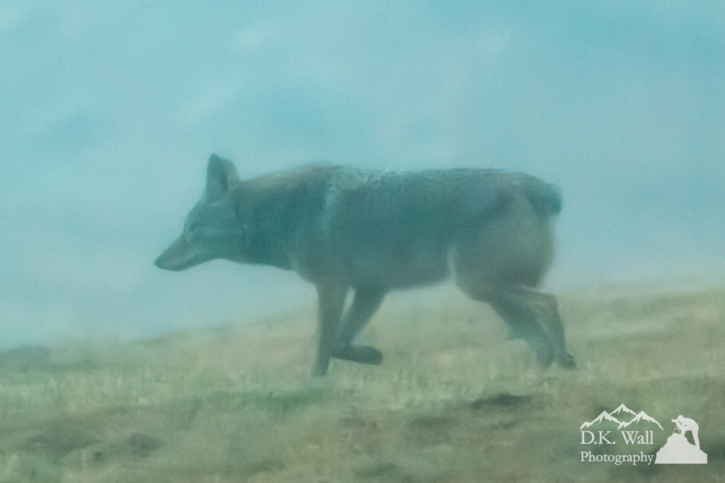 Coyote 1 - December 18 2016