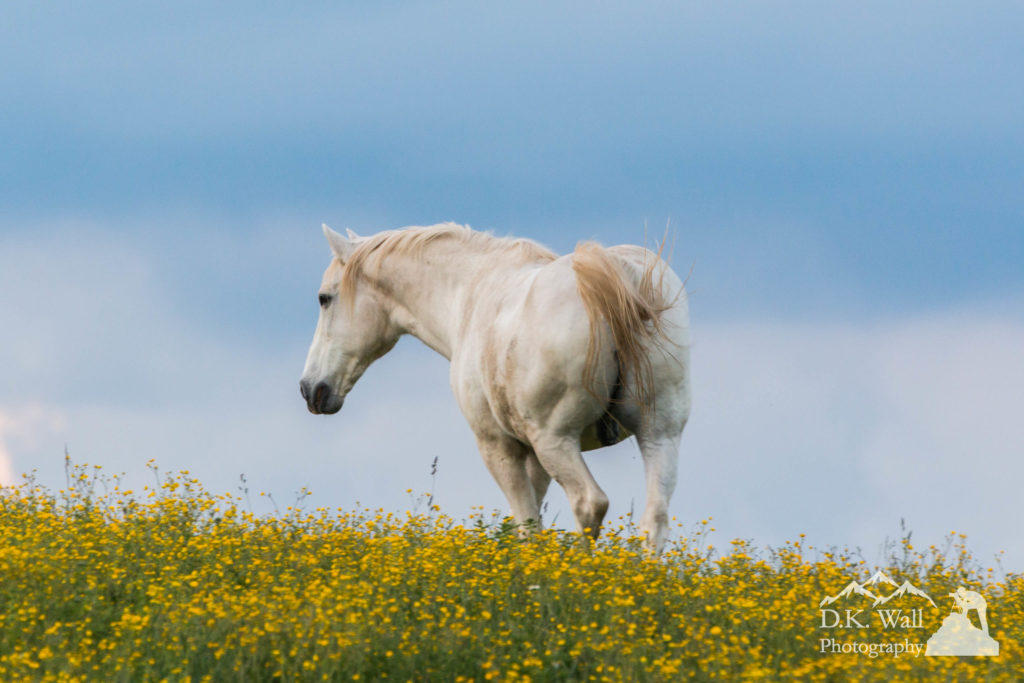 White Horse of Cataloochee Ranch