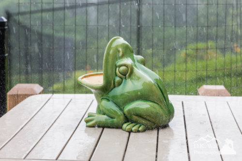 The frog! A centerpiece on a table on the back patio.