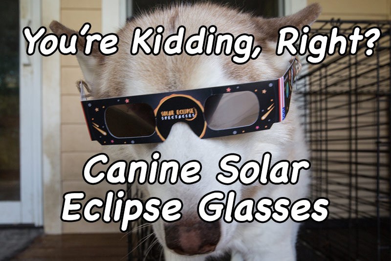 Canine Solar Eclipse Glasses
