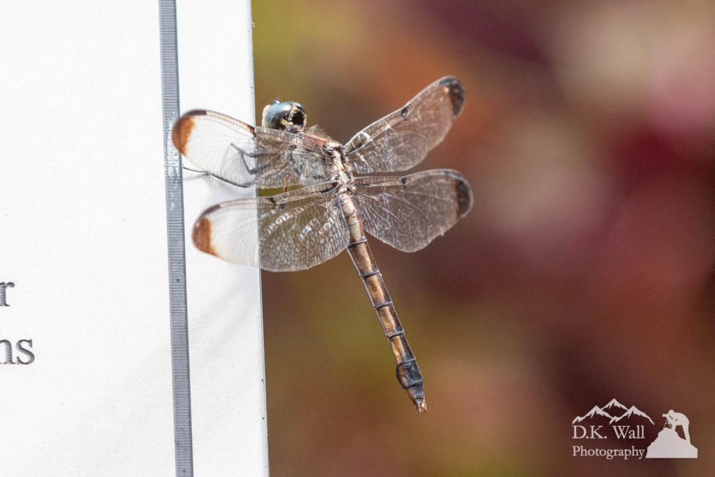 Dragonflies flit around constantly.