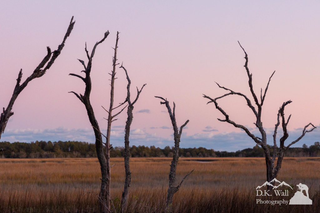 Dead trees on the edge of the marsh - the park in the background.