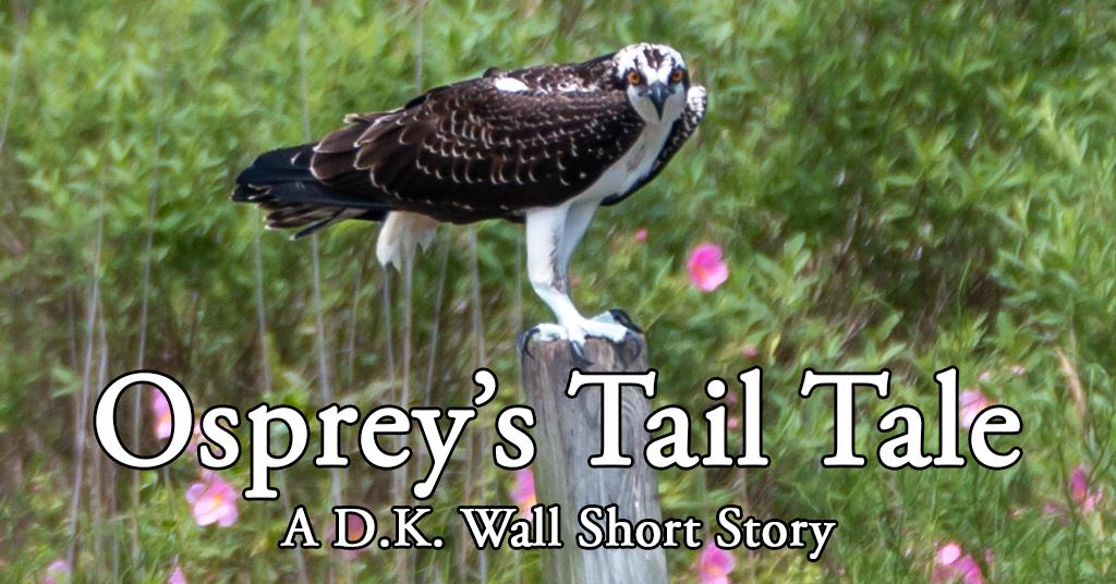Osprey's Tail Tale